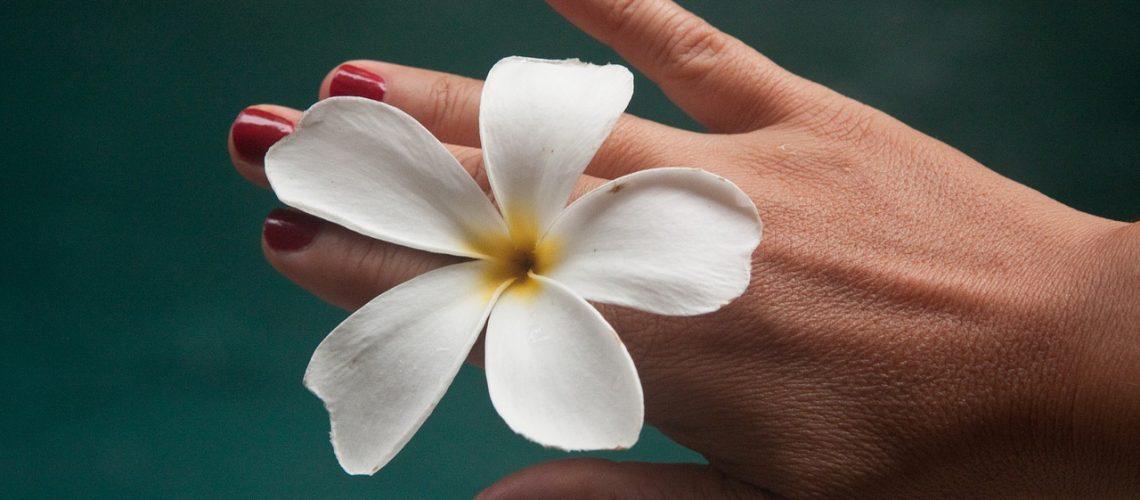 flower-1531824_1280