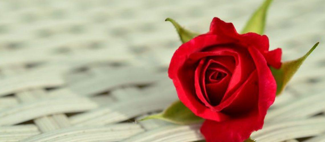 rose-812765_960_720-768x508